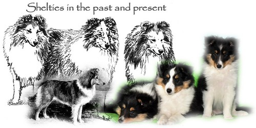 Shelties in the past and present